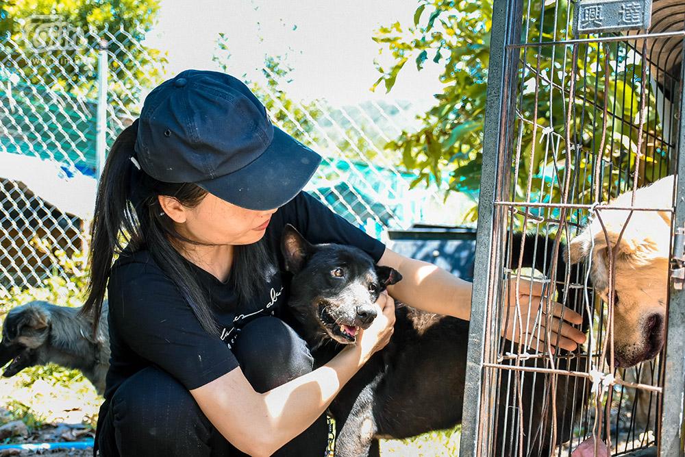 Chùm ảnh: Cuộc sống của những chú chó bị bỏ rơi nơi 'mái ấm' cách xa khu dân cư ở Đà Nẵng 4