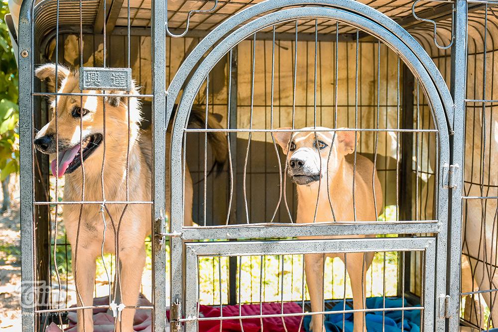 Chùm ảnh: Cuộc sống của những chú chó bị bỏ rơi nơi 'mái ấm' cách xa khu dân cư ở Đà Nẵng 5