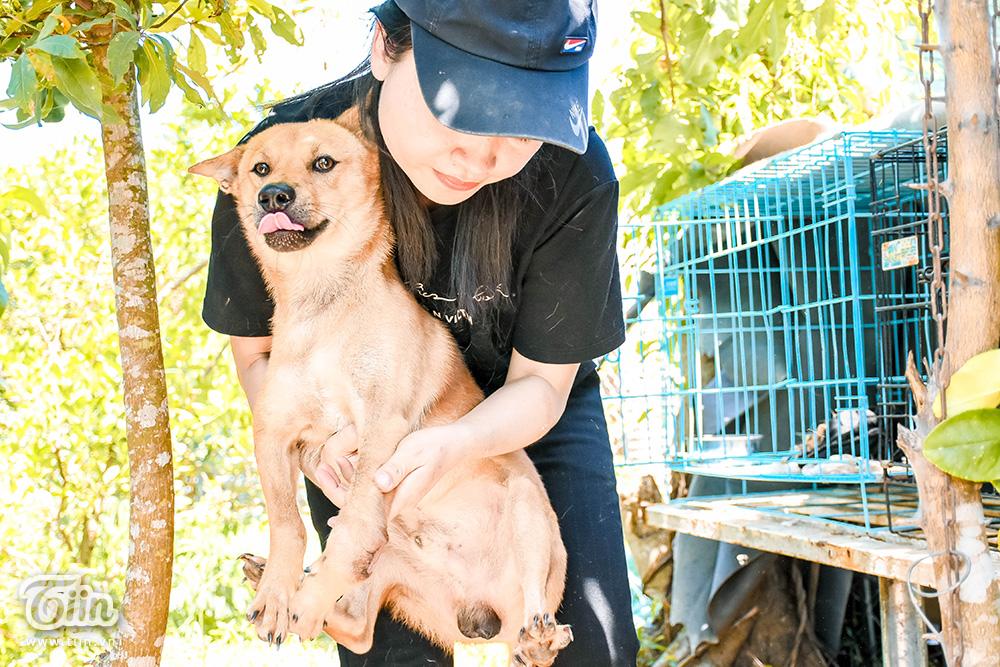 Chùm ảnh: Cuộc sống của những chú chó bị bỏ rơi nơi 'mái ấm' cách xa khu dân cư ở Đà Nẵng 6