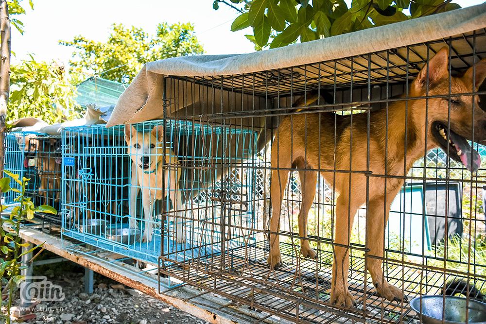 Chùm ảnh: Cuộc sống của những chú chó bị bỏ rơi nơi 'mái ấm' cách xa khu dân cư ở Đà Nẵng 7