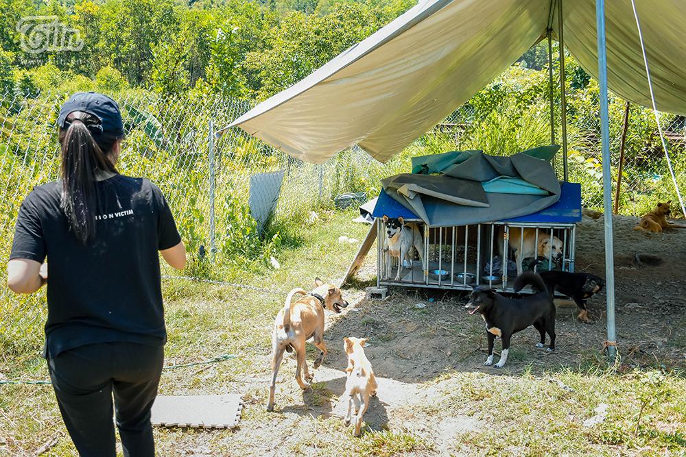 Chùm ảnh: Cuộc sống của những chú chó bị bỏ rơi nơi 'mái ấm' cách xa khu dân cư ở Đà Nẵng 8