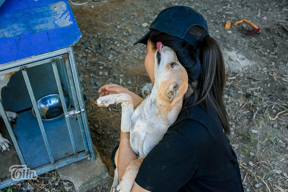 Chùm ảnh: Cuộc sống của những chú chó bị bỏ rơi nơi 'mái ấm' cách xa khu dân cư ở Đà Nẵng 9