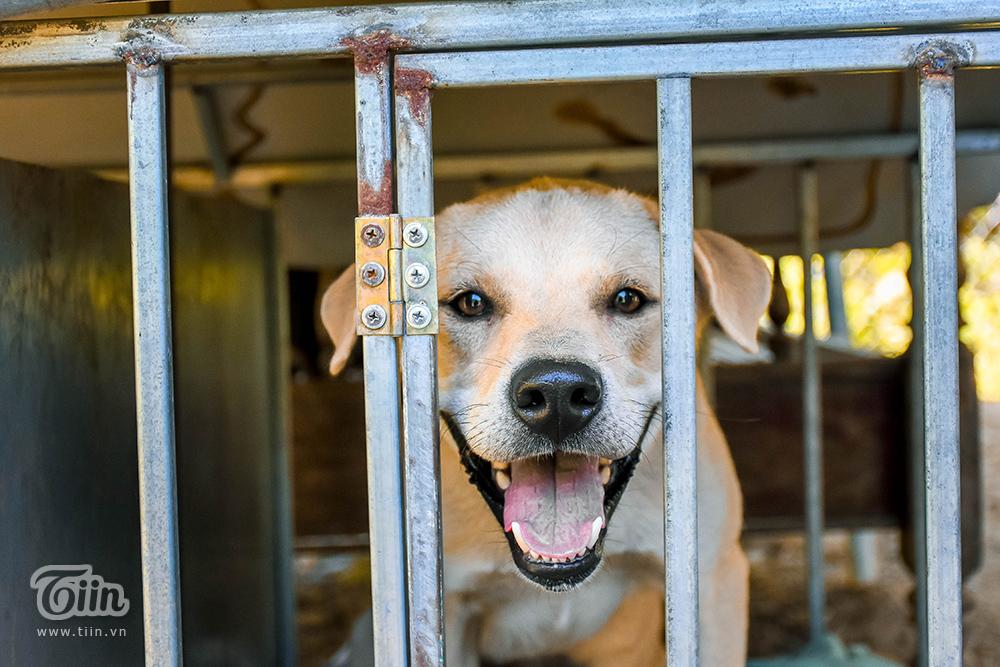 Chùm ảnh: Cuộc sống của những chú chó bị bỏ rơi nơi 'mái ấm' cách xa khu dân cư ở Đà Nẵng 10
