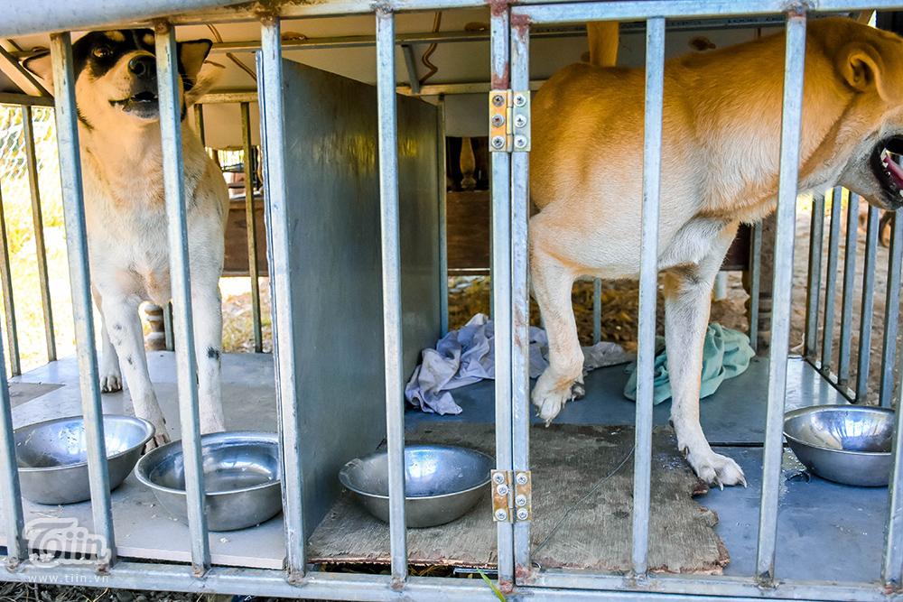 Chùm ảnh: Cuộc sống của những chú chó bị bỏ rơi nơi 'mái ấm' cách xa khu dân cư ở Đà Nẵng 11