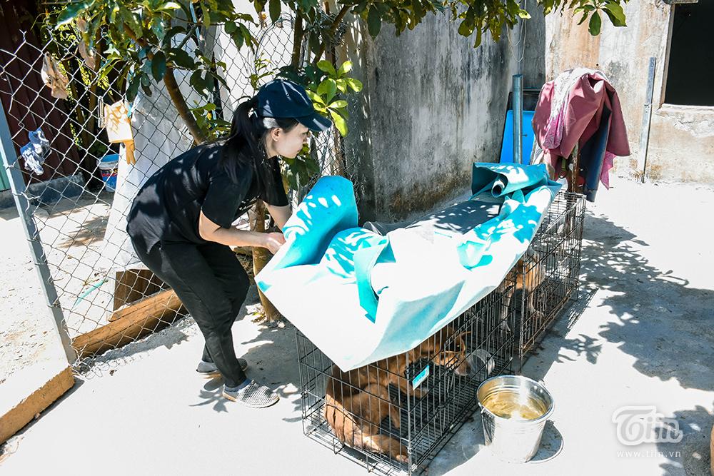 Chùm ảnh: Cuộc sống của những chú chó bị bỏ rơi nơi 'mái ấm' cách xa khu dân cư ở Đà Nẵng 13