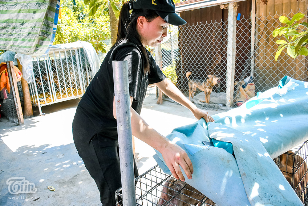 Chùm ảnh: Cuộc sống của những chú chó bị bỏ rơi nơi 'mái ấm' cách xa khu dân cư ở Đà Nẵng 14