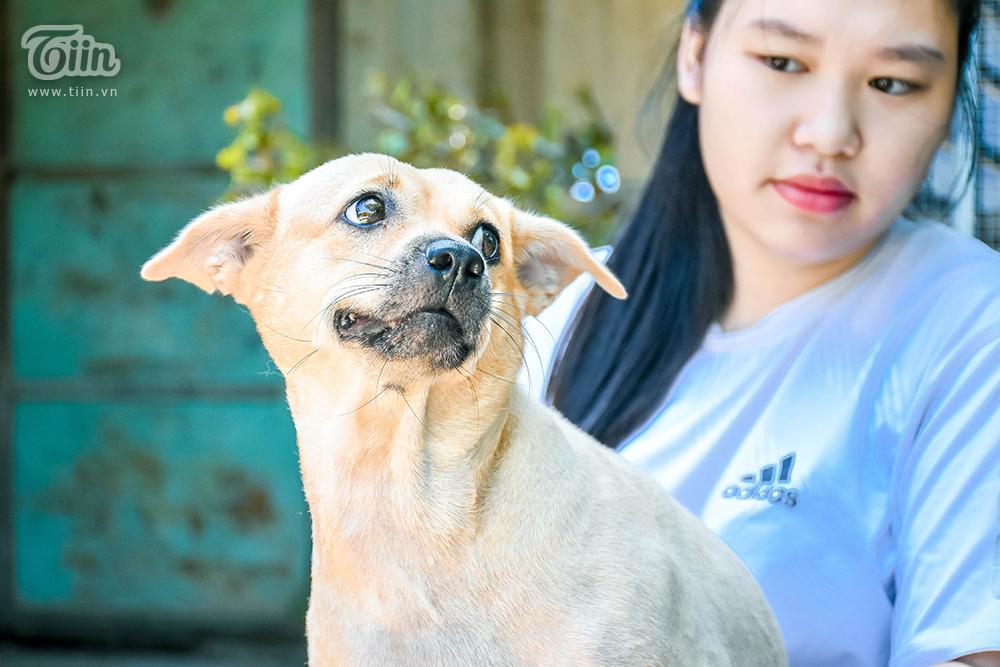 Chùm ảnh: Cuộc sống của những chú chó bị bỏ rơi nơi 'mái ấm' cách xa khu dân cư ở Đà Nẵng 15