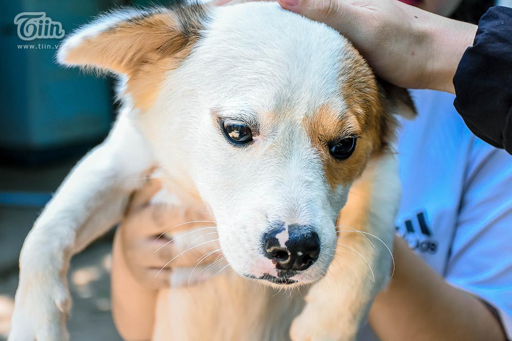 Chùm ảnh: Cuộc sống của những chú chó bị bỏ rơi nơi 'mái ấm' cách xa khu dân cư ở Đà Nẵng 17