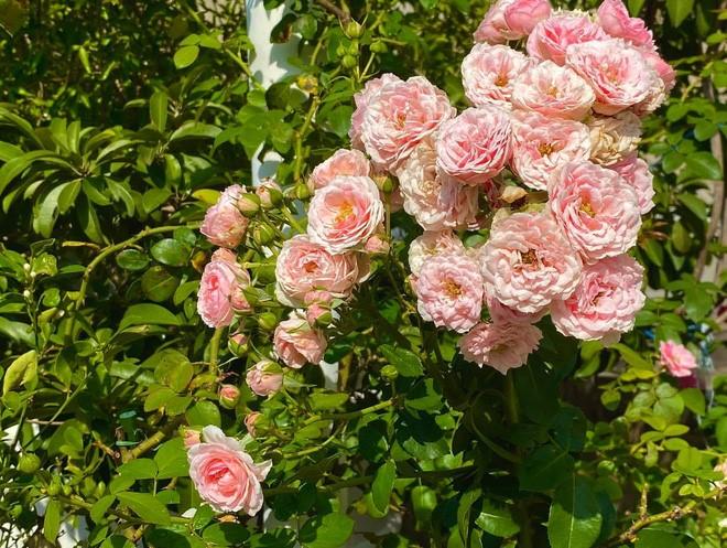Căn biệt thự trồng đầy hoa trái của vợ chồng Quyền Linh - Dạ Thảo.
