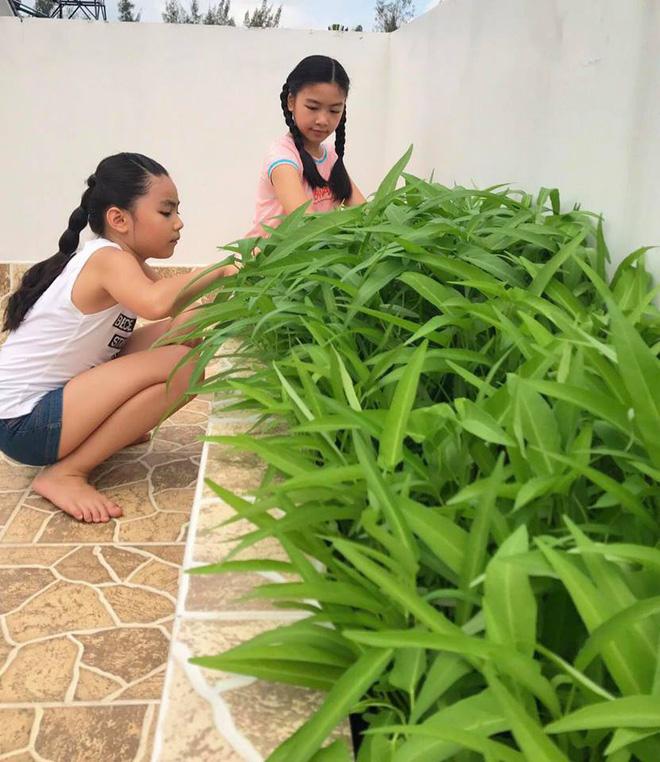 Bà xã Quyền Linh khoe thành quả thu hoạch hoa trái sai trĩu trong căn biệt thự 21 tỷ, được cả chồng lẫn 2 cô con gái xinh đẹp phụ giúp 13