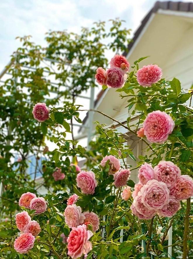 Bà xã Quyền Linh khoe thành quả thu hoạch hoa trái sai trĩu trong căn biệt thự 21 tỷ, được cả chồng lẫn 2 cô con gái xinh đẹp phụ giúp 17