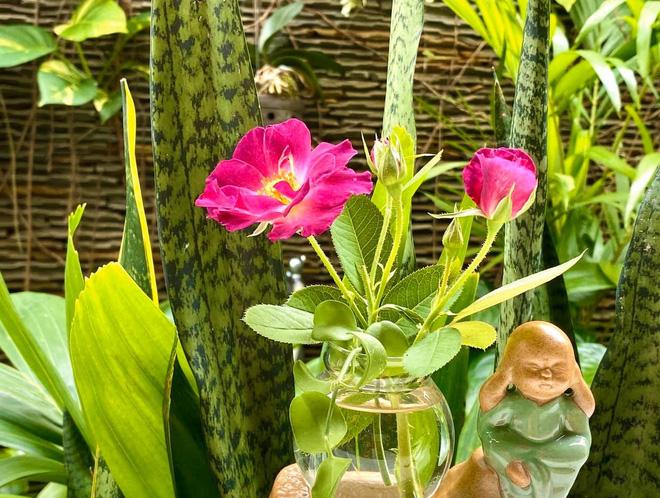Bà xã Quyền Linh khoe thành quả thu hoạch hoa trái sai trĩu trong căn biệt thự 21 tỷ, được cả chồng lẫn 2 cô con gái xinh đẹp phụ giúp 19