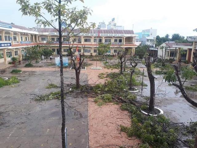 Cộng đồng mạng lan truyền những hình ảnh cây trong sân trường bị chặt trơ trụi.