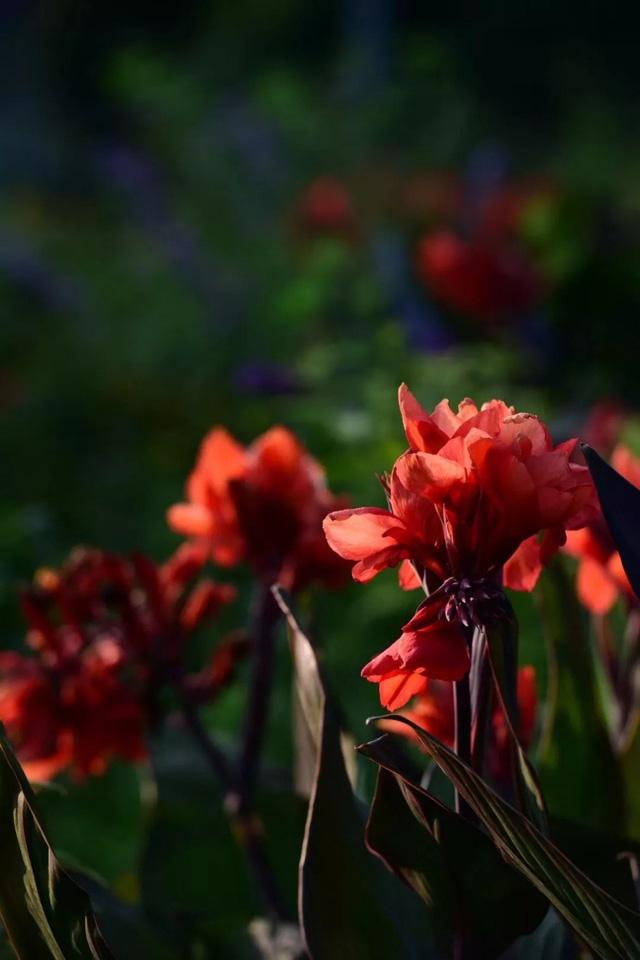 Cặp vợ chồng trẻ dành 5 năm để biến khu đất hoang rộng 6000m² thành khu vườn thiên đường của cỏ cây, hoa lá 9