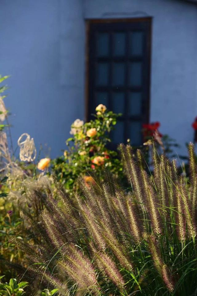 Cặp vợ chồng trẻ dành 5 năm để biến khu đất hoang rộng 6000m² thành khu vườn thiên đường của cỏ cây, hoa lá 13