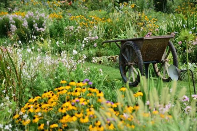 Cặp vợ chồng trẻ dành 5 năm để biến khu đất hoang rộng 6000m² thành khu vườn thiên đường của cỏ cây, hoa lá 23