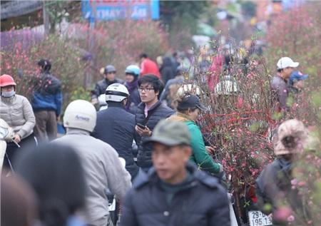 Đào Nhật Tân, đào rừng, mai trắng được các tiểu thương chuyển về cung ứng cho người dân dịp này.