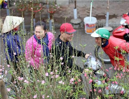 Theo ghi nhận, hiện giá đào Nhật Tân, quất Tứ Liên đang rẻ bằng 1/2 so với mọi năm, chỉ cần bỏ ra khoảng 500.000 đồng là có ngay một cành đào đẹp như ý.