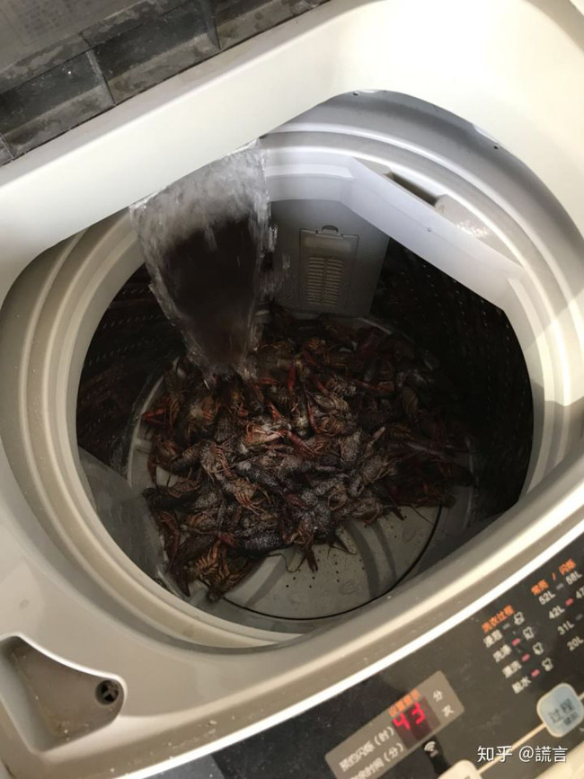 Học mót trên mạng cách làm sạch tôm bằng máy giặt, cặp vợ chồng lười mếu máo nhận cái kết 'cực đắng' 1