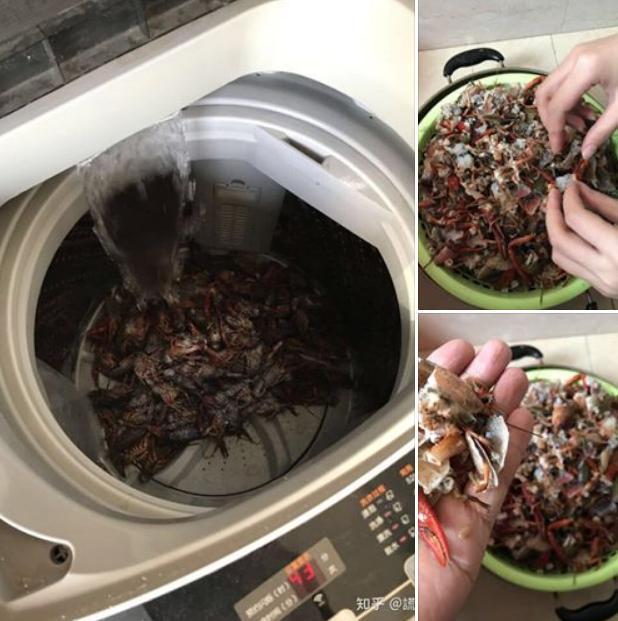 Học mót trên mạng cách làm sạch tôm bằng máy giặt, cặp vợ chồng lười mếu máo nhận cái kết 'cực đắng' 0