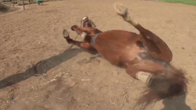 Con ngựa lười nhất thế giới: Hễ ai đòi cưỡi là giả vờ chết 5
