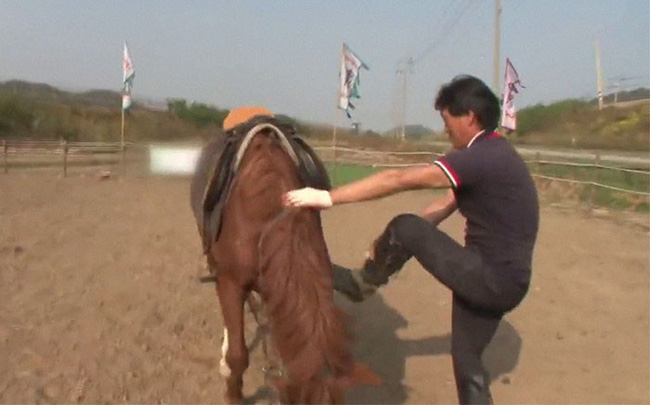 Con ngựa lười nhất thế giới: Hễ ai đòi cưỡi là giả vờ chết 13