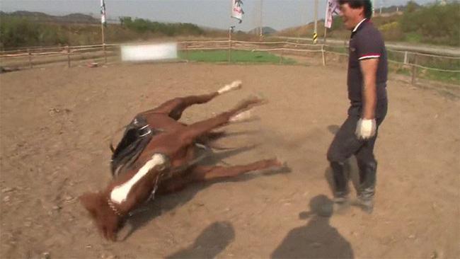 Con ngựa lười nhất thế giới: Hễ ai đòi cưỡi là giả vờ chết 14