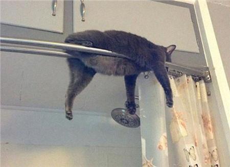 12 bằng chứng cho thấy mèo là lũ 'tự nhiên như ruồi', bạ đâu cũng lăn ra ngủ được! 1