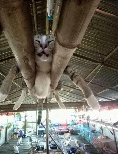 12 bằng chứng cho thấy mèo là lũ 'tự nhiên như ruồi', bạ đâu cũng lăn ra ngủ được! 2