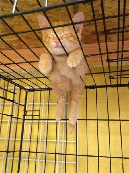12 bằng chứng cho thấy mèo là lũ 'tự nhiên như ruồi', bạ đâu cũng lăn ra ngủ được! 3