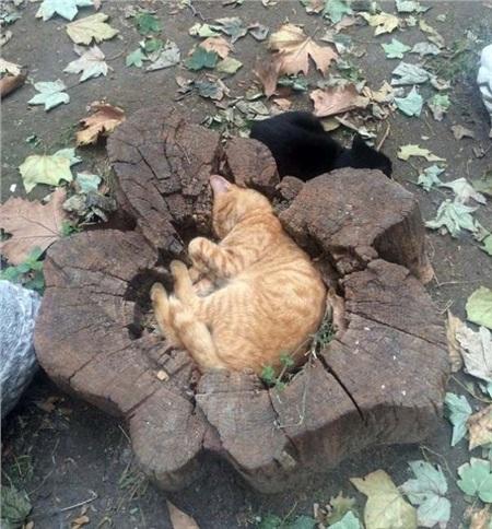 12 bằng chứng cho thấy mèo là lũ 'tự nhiên như ruồi', bạ đâu cũng lăn ra ngủ được! 6