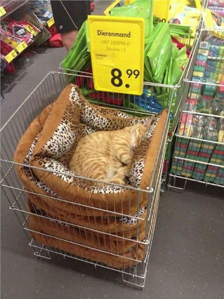 12 bằng chứng cho thấy mèo là lũ 'tự nhiên như ruồi', bạ đâu cũng lăn ra ngủ được! 8