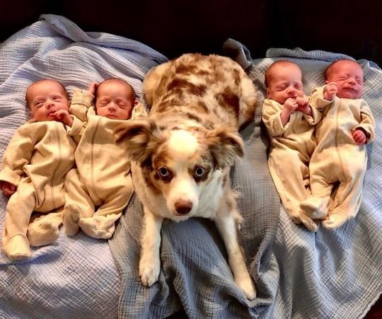 4 cậu nhóc giống nhau như tạc bên cún cưng Zeke.