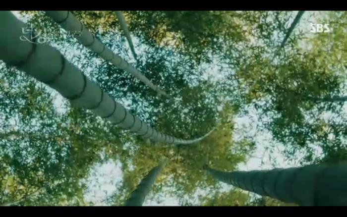 Lee Gon trở lại rừng tre để kiếm chứng cánh cổng.