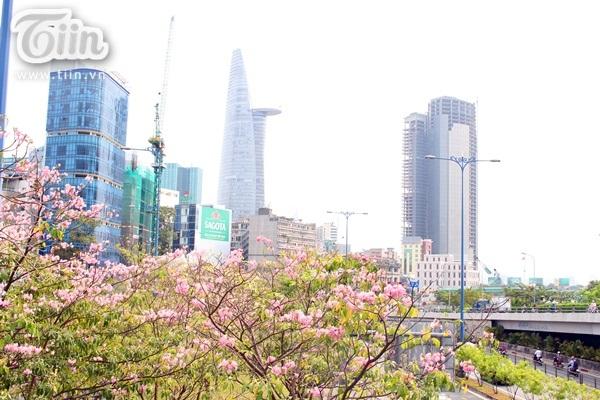 Sài Gòn tháng 4 rực rỡ với mùa hoa loa kèn 6