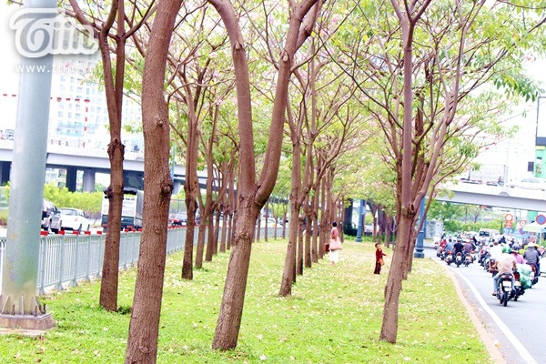 Sài Gòn tháng 4 rực rỡ với mùa hoa loa kèn 16