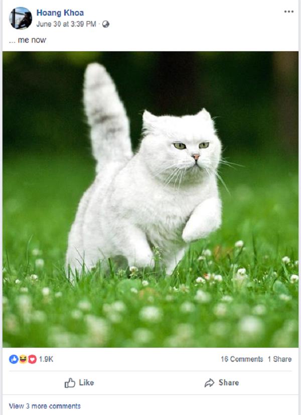 Những hình ảnh mèo tràn ngập trên trang Facebook cá nhân của anh.