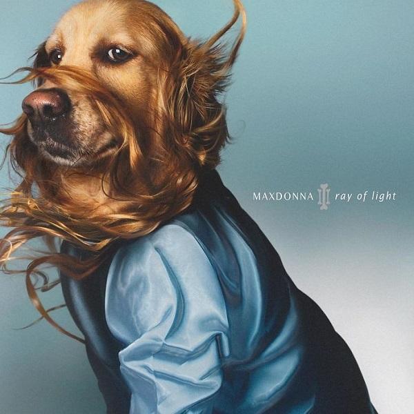 Một trong những màn cosplay thần sầu của chú chó Max trong dự án