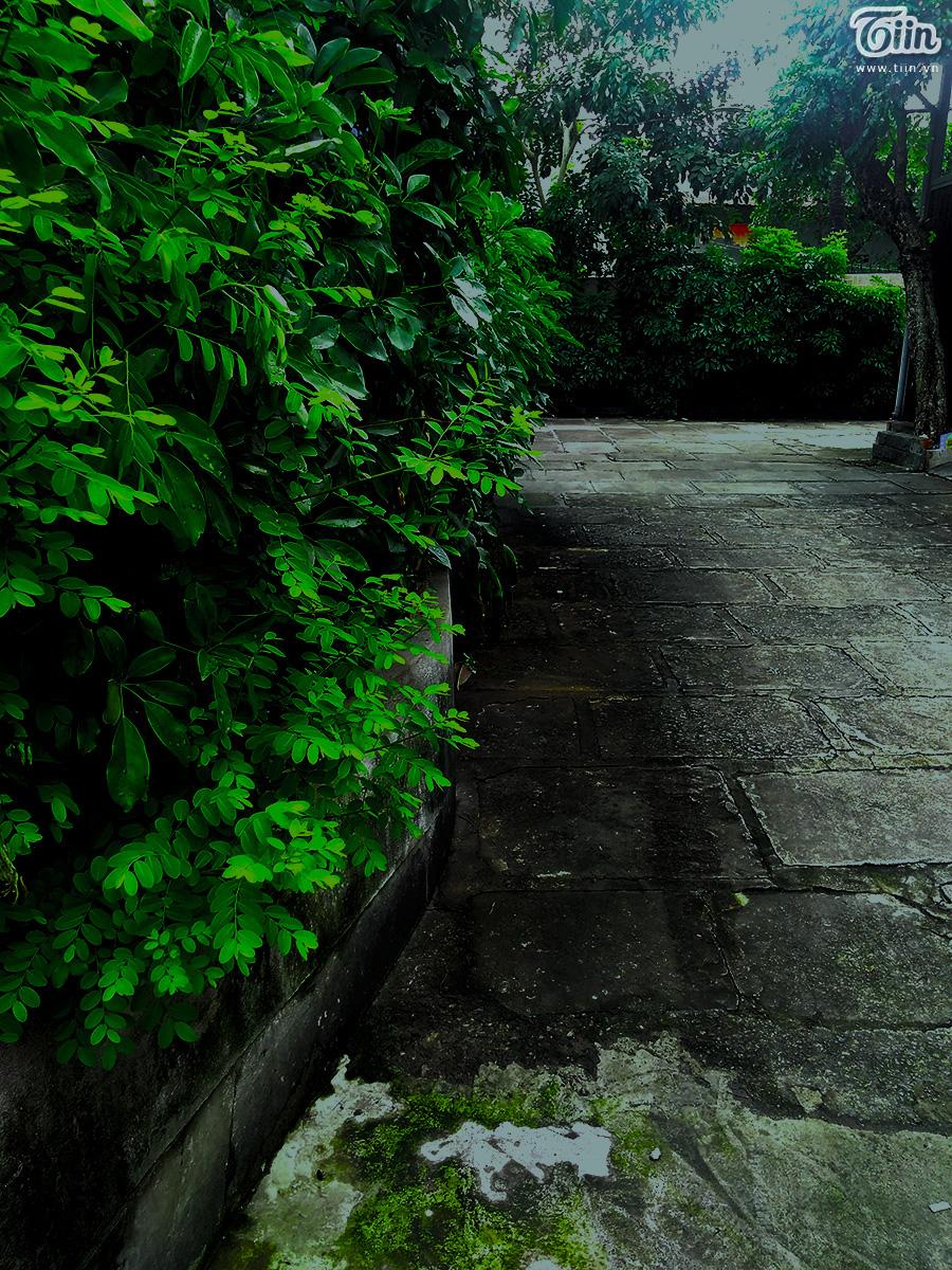 Lối ra vào với hàng cây xanh ngút mắt.