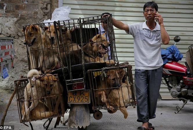 Việc thay đổi thói quen ăn thịt chó nhằm hướng tới các lợi ích lâu dài có lẽ sẽ rất khó thành công nếu chỉ thông qua việc cấm kinh doanh