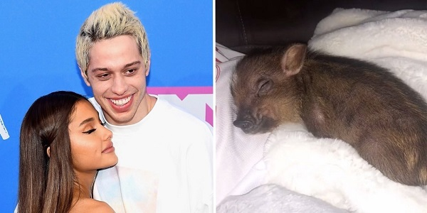 Ariana Grande tiếp tục nuôi chú lợn cưng của hai người.