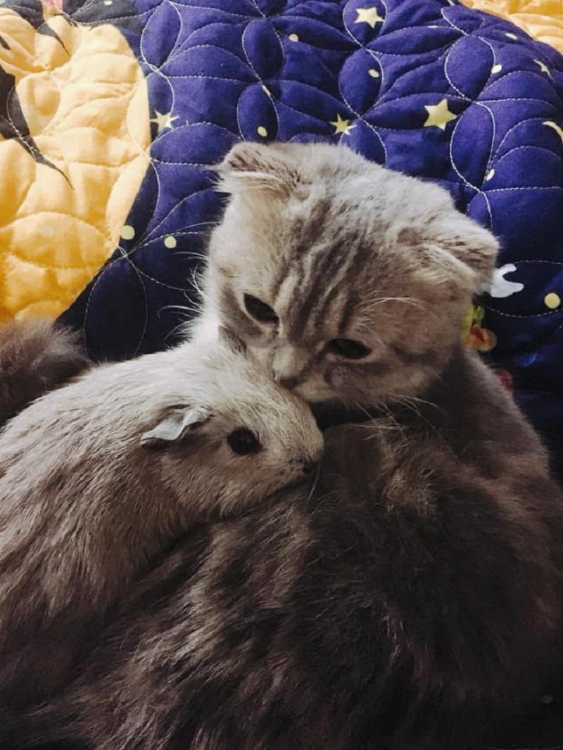 Tom và Jerry từ khi nào lại hòa đồng thế này?