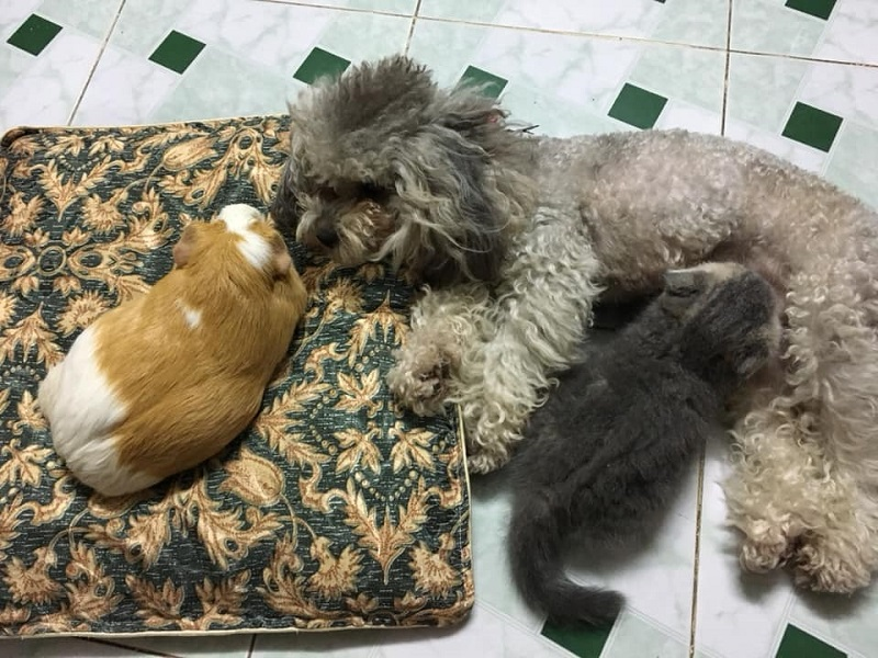 Cãi nhau như chó với mèo, không đội trời chung như mèo với chuột, ấy thế mà lại cùng xuất hiện tình cảm trong một khung hình thế này đây!