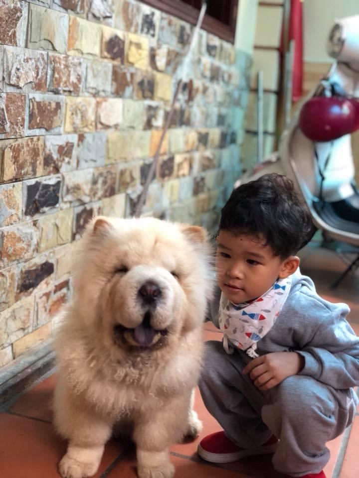 Chú chó trước khi bị cướp táo tợn