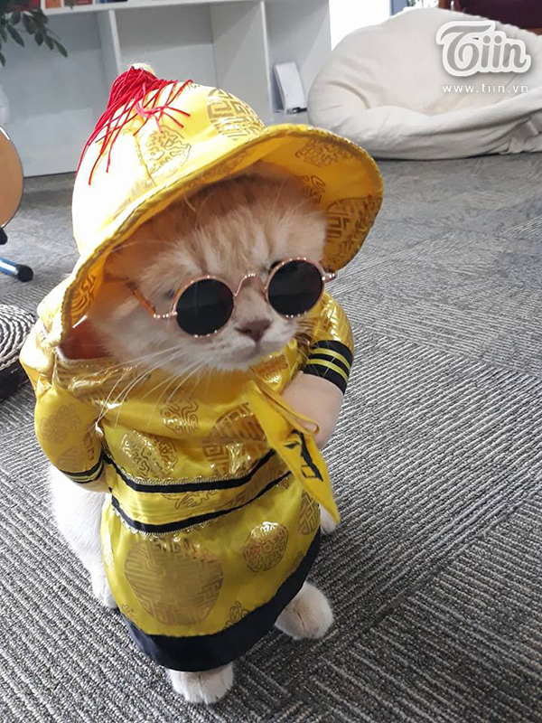 'Quàng thượng' mèo tên Chó tung tăng đi 'vi hành', đâu đâu cũng có fan 4