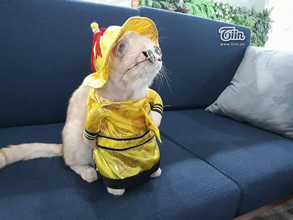 'Quàng thượng' mèo tên Chó tung tăng đi 'vi hành', đâu đâu cũng có fan 2