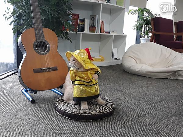 Dân mạng hài hước gọi Chó là 'Quàng Thượng' hay 'Pi xà'.