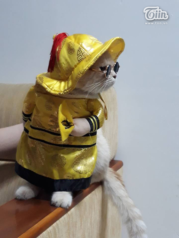 'Quàng thượng' mèo tên Chó tung tăng đi 'vi hành', đâu đâu cũng có fan 0