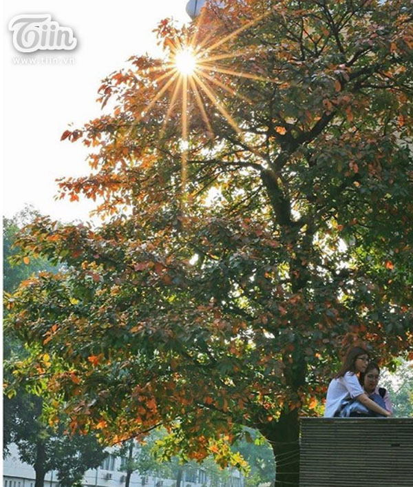 Chỉ với cây lộc vừng mùa lá đỏ mà sinh viên Ngoại thương có cả nghìn kiểu ảnh 'sống ảo' 9