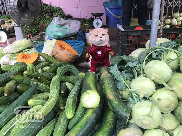 Quàng thượng Chó bất ngờ xuất hiện với hình ảnh Iron Man ở chợ